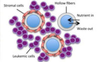 Co-Culture of Stromal and Erythroleukemia Cells in a Perfused Hollow Fiber Bioreactor System
